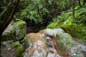Natuurfoto met wandeling door de Ardennen