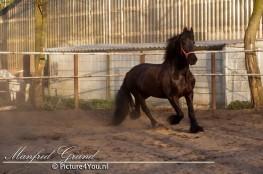 Manfred Grund - Picture4You.nl, ook voor paardenfotografie, bruidsreportages en de fotograaf voor al uw feesten en partijen.