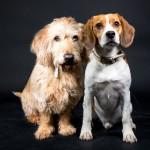 Broertjes Kees & Bobby als fotomodel - Een fotoshoot bij Picture4you.nl