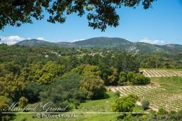 Mooie natuur van Plan-de-la-Tour met uitzicht op een druivenplantage.